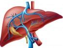 أطعمة تجدد أنسجة الكبد وتطهره من السموم