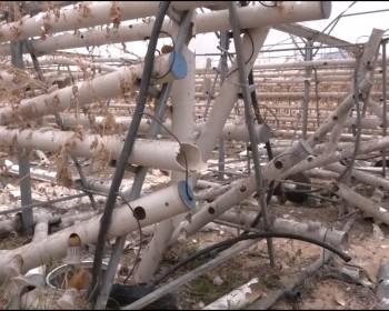 خاص بالصور والفيديو   قذائف العدوان تدمر أول مشروع من نوعه للزراعة المائية في فلسطين