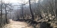 لبنان: حرائق الشمال تخرج عن السيطرة وتتمدد باتجاه الحدود السورية