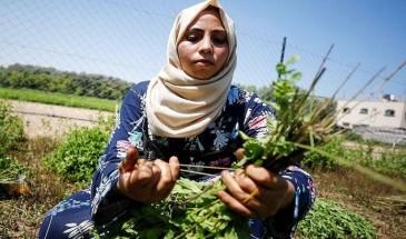 خاص بالفيديو|| 40 سيدة يؤسسن مشروعا لإنتاج مستحضرات التجميل من الأعشاب في غزة